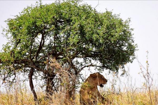An fara kidayar dabbobin dawa a Kenya