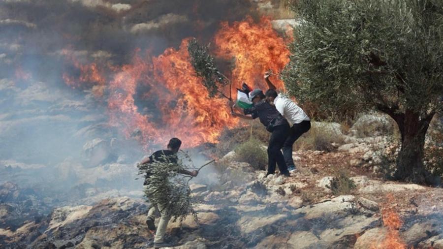 Yahudawa sun bankawa gonar zaitun din Falasdinawa wuta a Gaza
